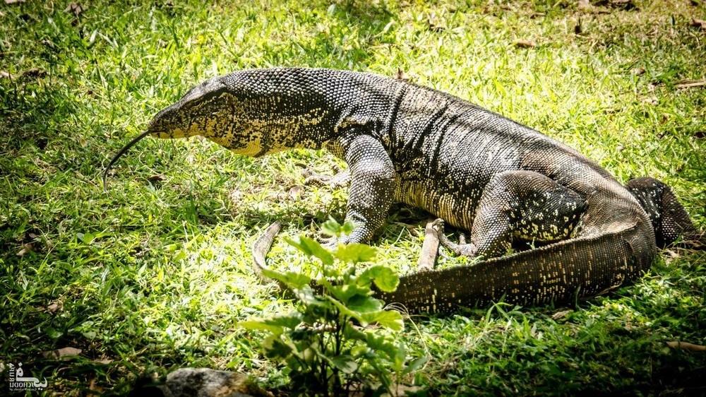 Sri-Lanka_zwierzeta_21.thumb.jpg.a59f65595548226574119e02fb59cb84.jpg